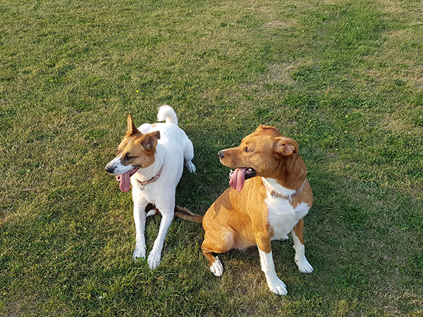 Two dogs outside