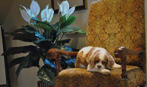 Pet Friendly Accomodations